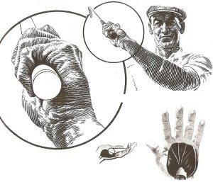 Hình trên: Tay cầm bàn tay trái ở đỉnh của backswing.Hình dưới: Hai hình giải phẫu cho thấy cấu trúc cơ của bàn tay trái.